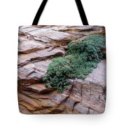 Growing From The Rock Terrain In Zion  Tote Bag