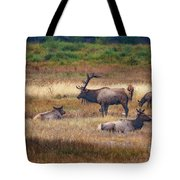 Harem  Tote Bag by Bitter Buffalo Photography