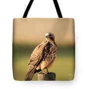 Hawk On The Edge Of A Field Tote Bag