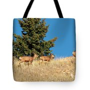 Herd Of Colorado Deer Tote Bag