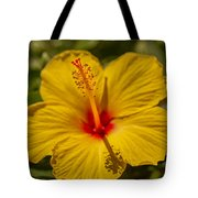 Hibiscus Macro Tote Bag by Keith Smith