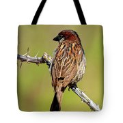 House Sparrow V1818 Tote Bag