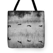 Ibsis Flying Fast At Evening To Roosting Ground Tote Bag by Dan Friend