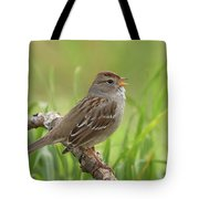 immature White-crowned Sparrow Tote Bag
