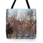 In Ninilchik A Moose Grazes In The Village In Late Winter Tote Bag