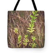 In Tall Grass Tote Bag by Whitney Goodey