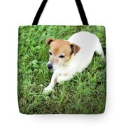 Jake Russell Tote Bag
