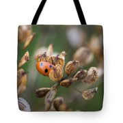 Lady Bird / Lady Bug In Flower Seed Head Tote Bag