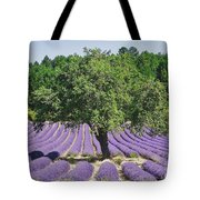 Lavender Field And Tree Tote Bag
