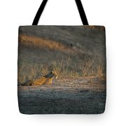 Lc12 Tote Bag by Joshua Able's Wildlife