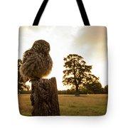 Little Owl Sunset Tote Bag