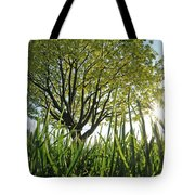 Marine Park Spring Sunshine Tote Bag