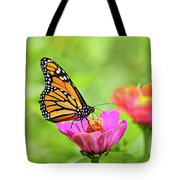 Monarch Butterfly Square Tote Bag