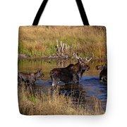 Moose At Green Pond Tote Bag