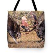 Moose Bulls Spar Close Up Tote Bag