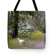 Morning Walk1 Tote Bag