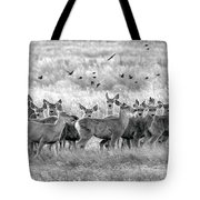 Mule Deer Black And White 01 Tote Bag by Rob Graham