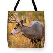 Mule Deer Buck In Rocky Mountain National Park Tote Bag