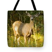 Mule Deer Doe Tote Bag