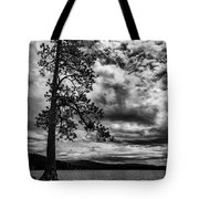 My Favorite Tree Black And White Tote Bag