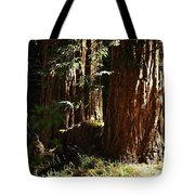 New Growth Redwoods Tote Bag