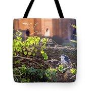 Night Heron At The Palace Tote Bag by Kate Brown
