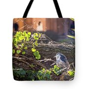 Night Heron At The Palace Revisited Tote Bag by Kate Brown