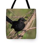 Northern Black Flycatcher Tote Bag by Thomas Kallmeyer