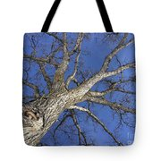Old Oak Tree Tote Bag
