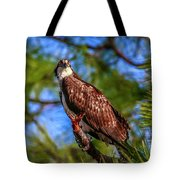Osprey Lookin' At Ya Tote Bag by Tom Claud