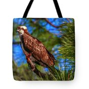 Osprey On Limb Tote Bag by Tom Claud