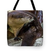 Otter Interrupted Tote Bag by Kate Brown