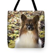 Papillon Sitting In Leaves Tote Bag