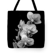 Phalaenopsis Orchids Black And White Tote Bag