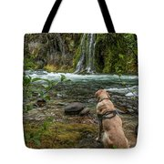 Photo Dog Jackson Contemplating His Next Photograph  Tote Bag by Matthew Irvin