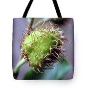Photography Macro Shot Of A Beechnut Tote Bag