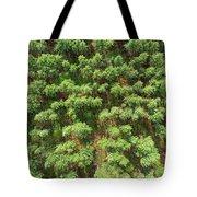 Pine Rows Aerial 2x1 Tote Bag