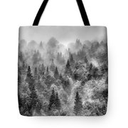 Pinsapos Into The Woods. Bw. Foggy Sunrise Tote Bag