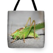 Portrait Of A Great Green Bush-cricket Sitting On The Pavement Tote Bag