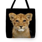 Portrait Of Little Lion Tote Bag by Sergey Taran