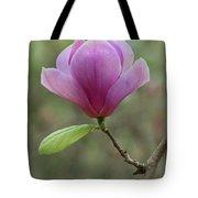 Pretty Soulange Magnolia Tote Bag