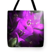 Rays Of Bougainvillea Tote Bag