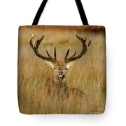 Red Deer Portrait 2 Tote Bag