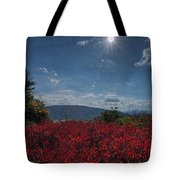 Red Leaves In The Sun Tote Bag by Dan Friend