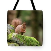 Red Squirrel Sciurus Vulgaris Eating A Seed On A Stone Wall Tote Bag