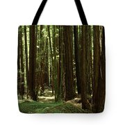 Redwood Trees Armstrong Redwoods St Tote Bag
