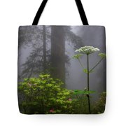 Redwoods By Crescent City 1 Tote Bag