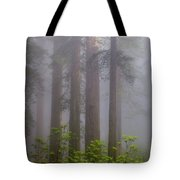 Redwoods By Crescent City 8 Tote Bag