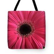 Rhapsody In Pink - Gerbera Daisy Tote Bag