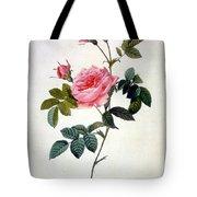 Rosa Inermis Tote Bag